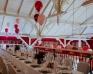 Sala weselna - Dwór Korona Karkonoszy, Karpacz - Zdjęcie 1
