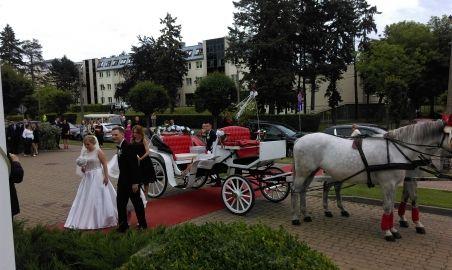 Sale weselne - Sala Bankietowa Łazienki II - 5975f96604e7aimag1207.jpg - SalaDlaCiebie.pl
