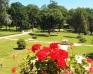Pałac Żelazno - Zdjęcie 51