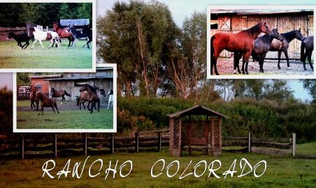 Sale weselne - Agroturystyka Wielkopolska Rancho Colorado - SalaDlaCiebie.com - 9