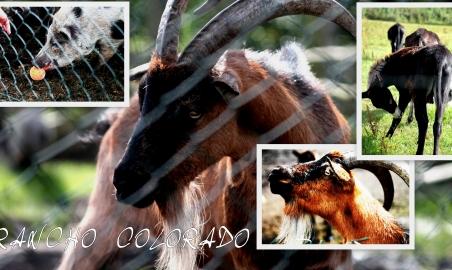 Sale weselne - Agroturystyka Wielkopolska Rancho Colorado - 5a65c32c80214dla_pani_ani_z_colorado1.jpg - SalaDlaCiebie.pl