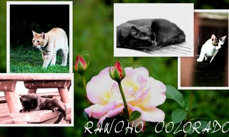 Sale weselne - Agroturystyka Wielkopolska Rancho Colorado - 5a65c331af4a8dla_pani_ani_z_colorado2.jpg - SalaDlaCiebie.pl